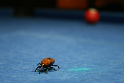 dead beetle